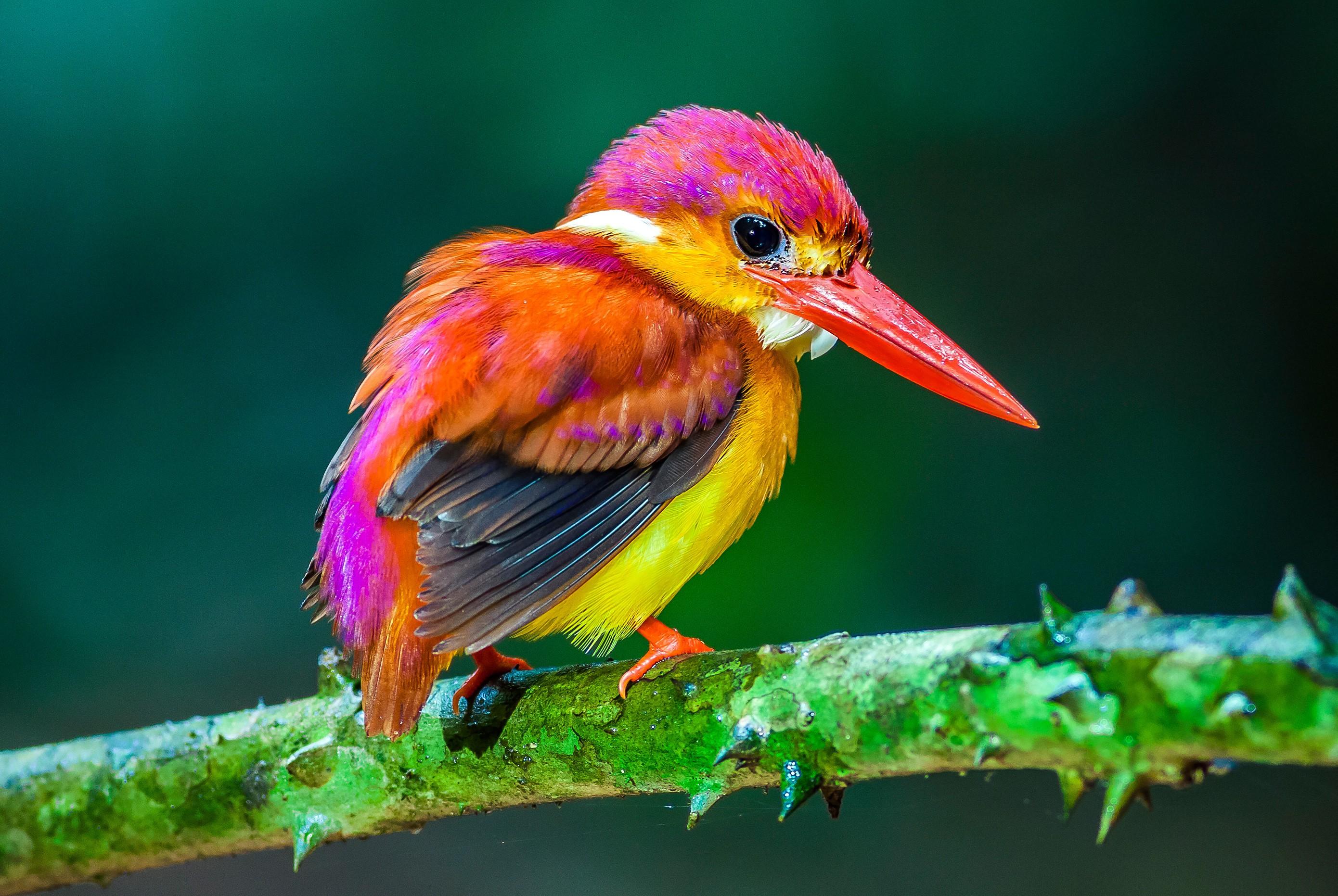 Las 1000 aves ex ticas m s bellas del mundo fotos y for Imagenes de jardines exoticos