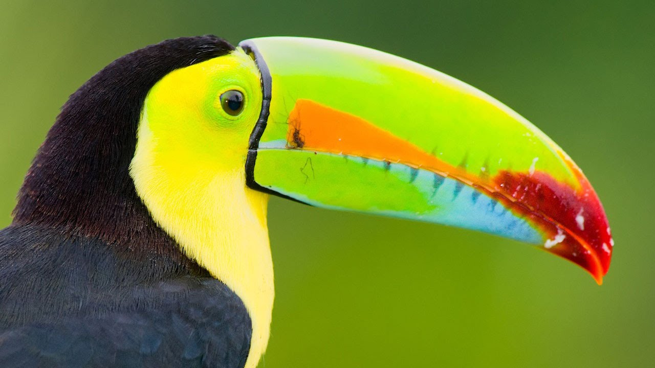 definir pájaro inquieto