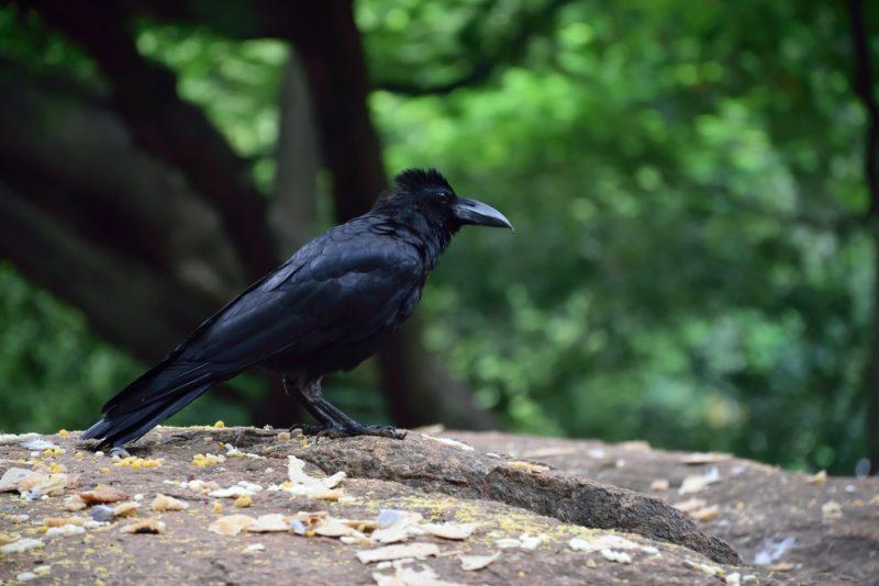 Cuervos 2