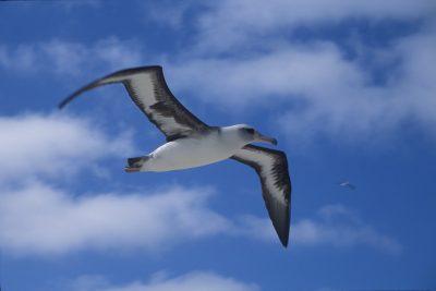 Albatros Aves Exóticas