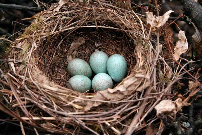 Resultado de imagen de nido